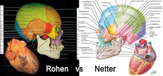 Head To Comparison Rohen Vs Netter Anatomy Atlas Books