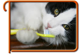 cat dental care pet dental services kirkland pet dental care kirkland wa