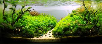 Beaten By Hanson Leung - Aquascape Awards | Nature Aquascapes ... Aquascaping Nature Aquariums Of Zoobotanica 2013 Youtube Aquascape The Month November 2009 Riverbank Aquascaping Style Part 5 Roots By Papanikolas Nikos Awards Aquascapes Lab Tutorial River Bottom Natural Aquarium Plants The Planted Tank 40 Gallon Aquarium Everything About Incredible Undwater Art Cube Tanks Aquariums Dutch Vs How To A Low Tech Part 1