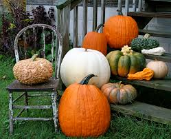 Pumpkin Patch Patterson Ny by Picking The Perfect Pumpkins A Guide To Heirloom Pumpkin Varieties