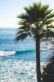 227 Best Pretty Palm Tree Images On Pinterest Trees Tumblr
