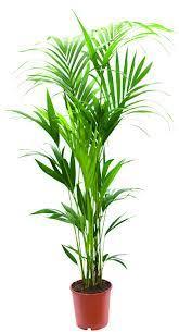 plantes vertes d interieur plantes interieur plantes vertes vente de fleurs à nancy