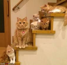 cat stairs the cat stairs jpg