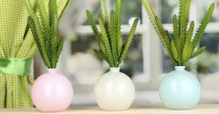 kaktus als zimmerpflanze verwenden hagebau de