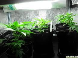 growing help cfl lights