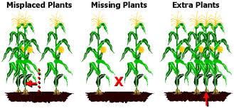 corn planting depth and spacing