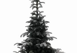 Lifelike Artificial Christmas Trees Canada by 9ft Snowy Nordmann Fir Life Like Artificial Christmas Tree Hayes