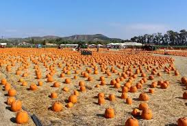 Pumpkin Patch Animal Farm In Moorpark California by Underwood Family Farms Family Friendly Day Trip Moorpark