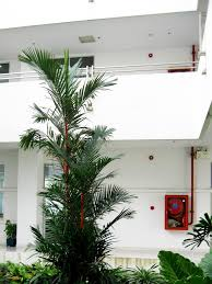 Grow Lamps For House Plants by Caring For Palms How To Grow Palm Trees Inside