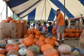 Pumpkin Patch Festival Sarasota by Your Calendar Fruitville Grove Pumpkin Fest Sarasota Your