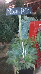Xmas Tree Watering Devices by Jensen Nursery