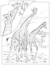 Giraffes Adult Coloring Pages