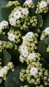 Diy Best Low Light Houseplants Outdoor Plants That Need Little