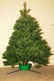 Nordmann Fir Christmas Trees Wholesale by Home Tim Mitchell U0027s Christmas Trees