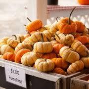 Snohomish Pumpkin Patch by Bob U0027s Corn U0026 Pumpkin Farm 252 Photos U0026 119 Reviews Pumpkin