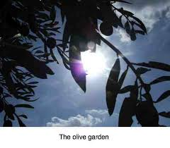 Olive garden nutrition parades the virtues of this humble fruit