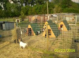 Goat Village. This Would Be Cool With Like Two That They Can Climb ... Outstanding Goat Housing Plans Ideas Best Inspiration Home Building A Barn Part 2 Such And 25 Barn Ideas On Pinterest Pen And Nail Blog April 2015 10x12 With 8x10 Openair Loafing Area I Like This Because It Pasture Dairy Info Your Online Shed Designs Beautiful Garden Package Surprising Gallery Idea Design Stalls For Goats Goat Houses Play Weddings And Other Events At Khimaira Farm