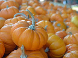 Homemade Fertilizer For Pumpkins by Growing Pumpkins In Containers Hgtv