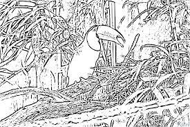 Coloriage Toucan