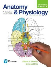 Anatomy Physiology Coloring Workbook A Complete Study Guide