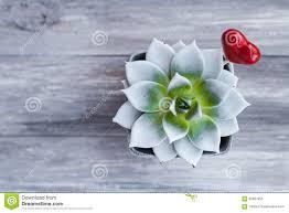 coeur de en pot coeur de forme de lucette de pot d agave photo stock image 66507953