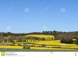 100 Ampurdan Canola Fields In The Stock Photo Image Of Nature