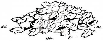 0511 1008 1913 5018 Black and White Pile of Leaves clipart image