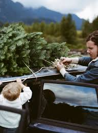 Christmas Tree Saplings For Sale Ireland by Josh Garrels And Son Photographed By Parker Fitzgerald For Kinfolk