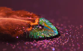 Wallpaper Peacock Feather Droplets 4K Photography 8001