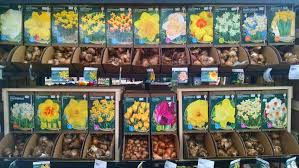 plant fall bulbs for blooms garden supply co