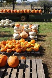 Pumpkin Patch Clarksville Tn 2015 by Pumpkin Time At Osborne Farms News Robertsoncountyconnection Com
