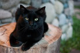 Longtime Superstitions About Black Cats From the Middle Ages