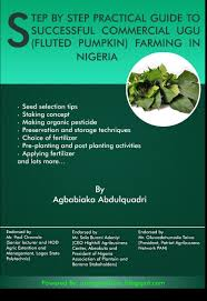 Natural Fertilizer For Pumpkins by Step By Step Practical Guide To Successful Commercial Ugu Fluted