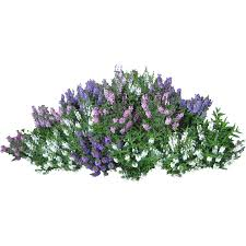 Bushes PNG Images Free Download Bush