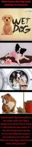 Dogs That Dont Shed And Smell by The 25 Best Dog Smells Ideas On Pinterest Diy Pet Shampoo Dogs