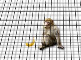 A Monkey In Cage That Extends Infinitely Two Dimensions But Not The Third