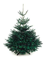 Christmas Tree Saplings Ireland by Real Christmas Trees Products