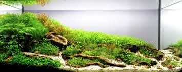 Roots By Papanikolas Nikos - Aquascape Awards | Nature Aquascapes ... Aquascaping Nature Aquariums Of Zoobotanica 2013 Youtube Aquascape The Month November 2009 Riverbank Aquascaping Style Part 5 Roots By Papanikolas Nikos Awards Aquascapes Lab Tutorial River Bottom Natural Aquarium Plants The Planted Tank 40 Gallon Aquarium Everything About Incredible Undwater Art Cube Tanks Aquariums Dutch Vs How To A Low Tech Part 1