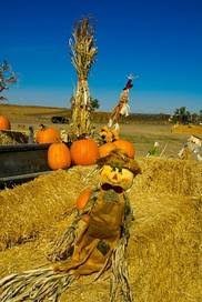 Colorado Pumpkin Patch by Fun Things To Do In Henderson Co With Kids Trekaroo