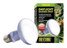 Uv B Lamp For Vitamin D Uk by A Guide To Vivarium Lighting Vivarium World