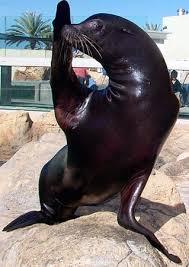 aquarium of the pacific learning center california sea