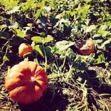 Pumpkin Patch Near Green Bay Wi by Schaake Pumpkin Patch 11 Reviews Farmers Market 1791 N