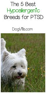 Small White Non Shedding Dog Breeds by Best Hypoallergenic Dog Breeds For Ptsd