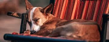 tipps zum thema hundebett so wählst du den passenden