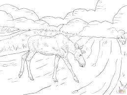 Click The Moose Crossing A Road Coloring