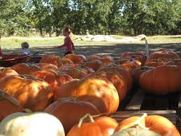 Best Pumpkin Patch Near Roseville Ca by Your Guide To Local Pumpkin Patches Dixon Ca Patch