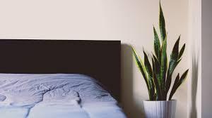 pflanzen im schlafzimmer so hast du einen gesunden schlaf