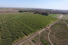 Pumpkin Farm Illinois Best by Best Corn Mazes And Pumpkin Patches For Fall Fun Cheapism
