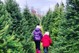 20 Christmas Tree Farms Near Philadelphia Where You Can Buy ... Smithstix Promotion Code Christmas Tree Hill Promo Merrill Rainey On Twitter For Those That Were Inrested Greenery Find Great Deals Shopping At My First Svg File Gift For Baby Cricut Nursery Svg Kids Svg Elf Shirt Elves Onesie 35 Off Balsam Hill Coupons Promo Codes 2019 Groupon Shop Coupons Nov 2018 Gazebo Deals Spaghetti Factory Mitchum Deodorant White House Ornament Coupon Weekend A Free Way To Celebrate Walt Disney World Walmart Christmas Card Free Calvin Klein Black Tree Skirt Rid Printable Suavecito Whosale Discount