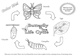 Butterfly Life Cycle Coloring Picture